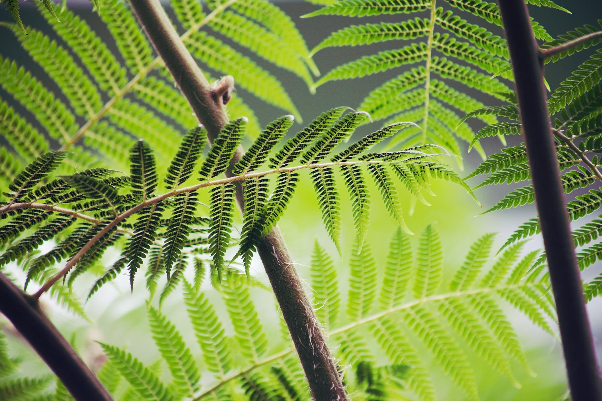 El Caso Ilativo (Mihin) – Gramática del Finés