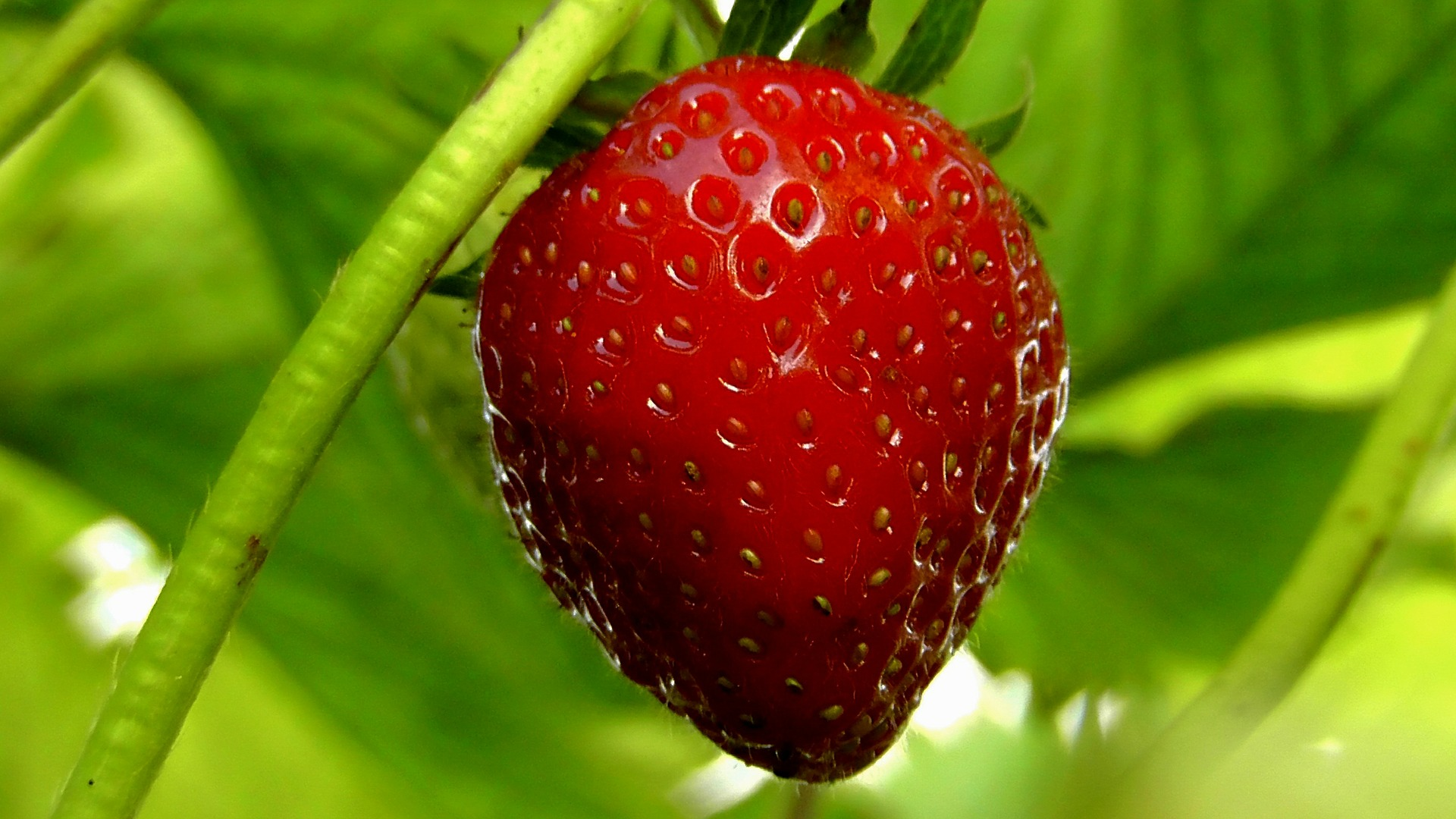 Berries – Marjat – Finnish Vocabulary