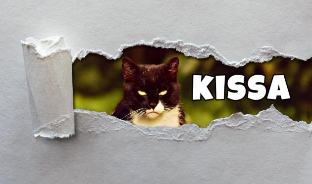 Random Words #2: Kissa – Cat – Finnish Vocabulary